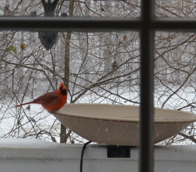 Cardinal on Heated Bird Bath