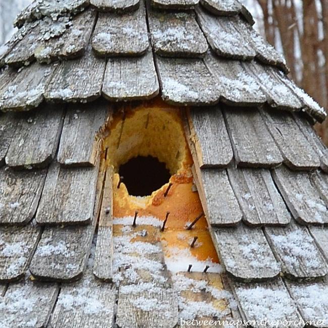 Dove Cote Damaged by Woodpecker 3_wm