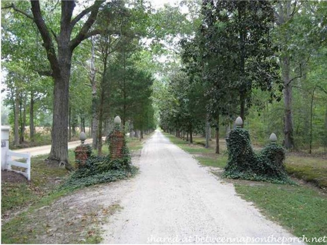 Driveway leading to Oak Hall, Green Revival Manor Home