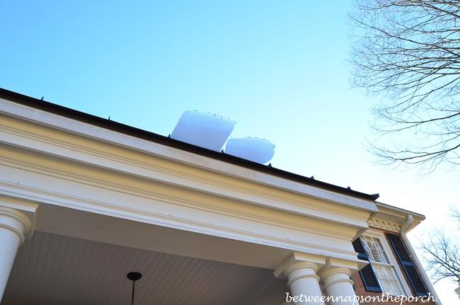 Boxwood Topiaries Ice Damage