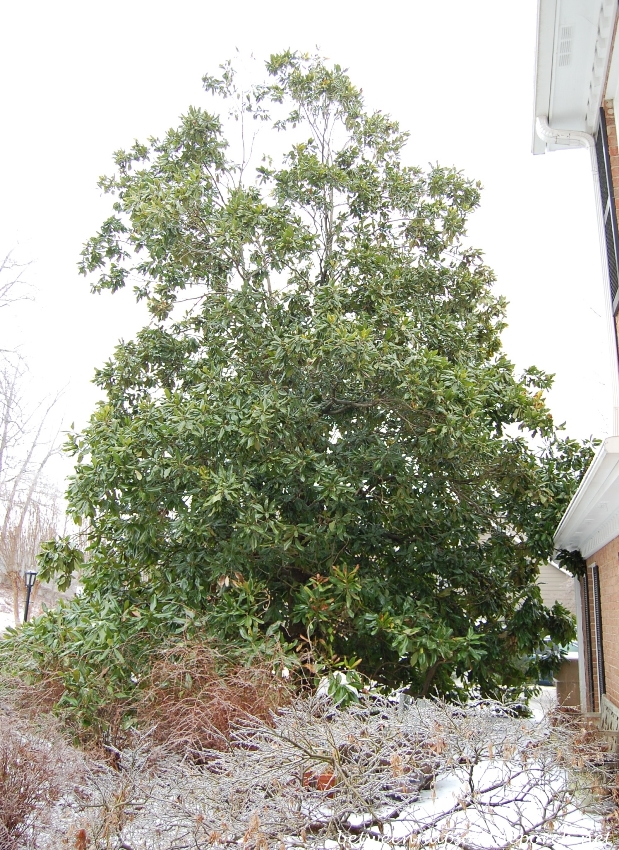 Ice Storm in Georgia, 2014 10