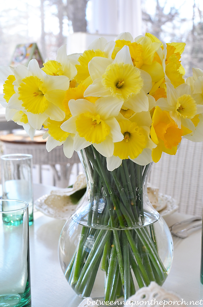 Daffodils from a Spring Garden