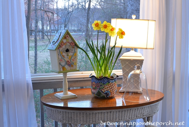 Screened Porch Daffodils for Spring_a_wm