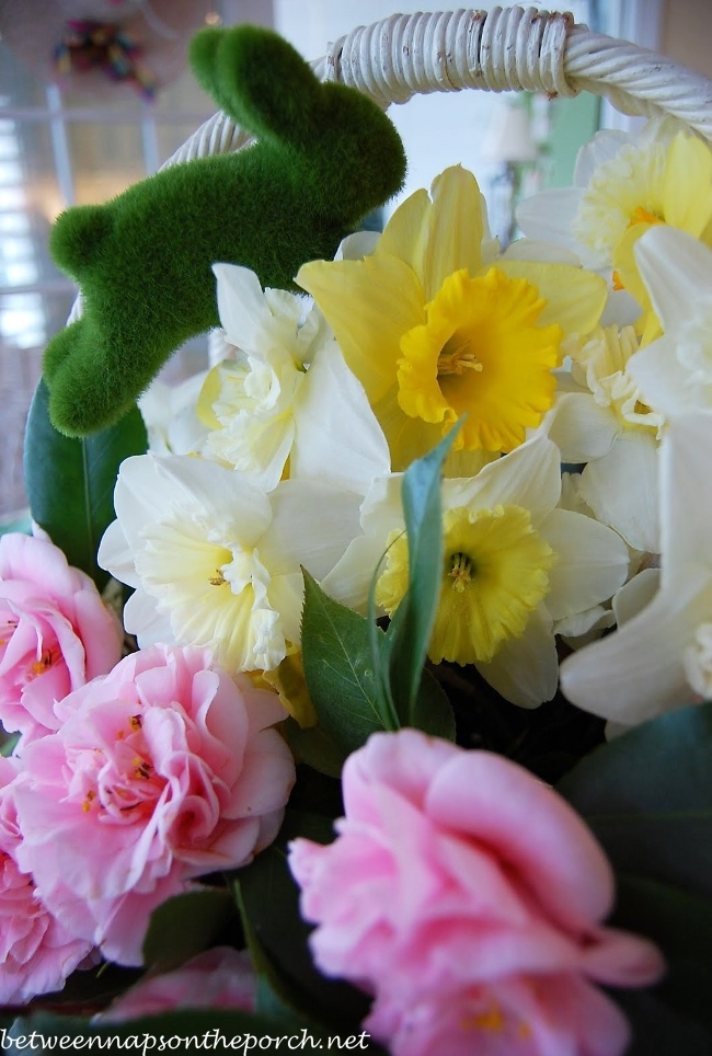 Camellias and Daffodils