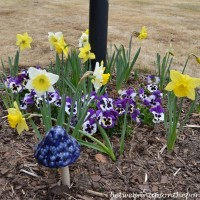 In the Garden: Daffodils and Pansies
