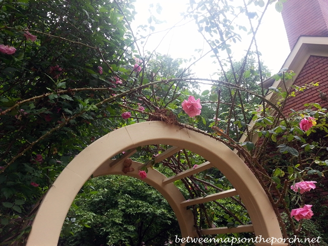 Bird's Nest Atop Arbor in Garden