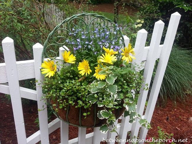 Flower Basket on Gate_wm