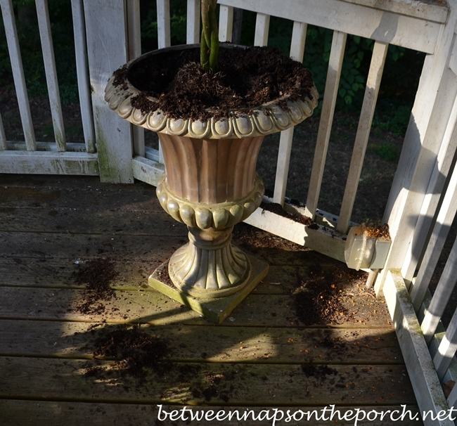 Howt To Keep Squirrels Out of Flower Pots 1