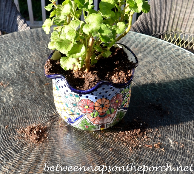 Howt To Keep Squirrels Out of Flower Pots 3