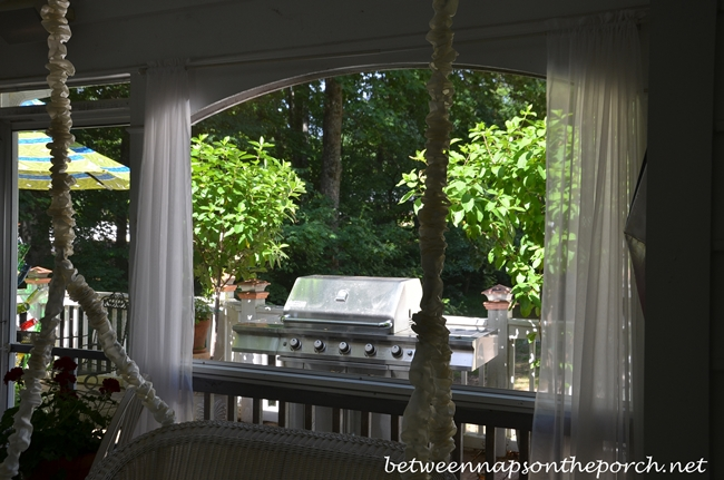 Tardiva Topiary Hydrangeas for the Deck