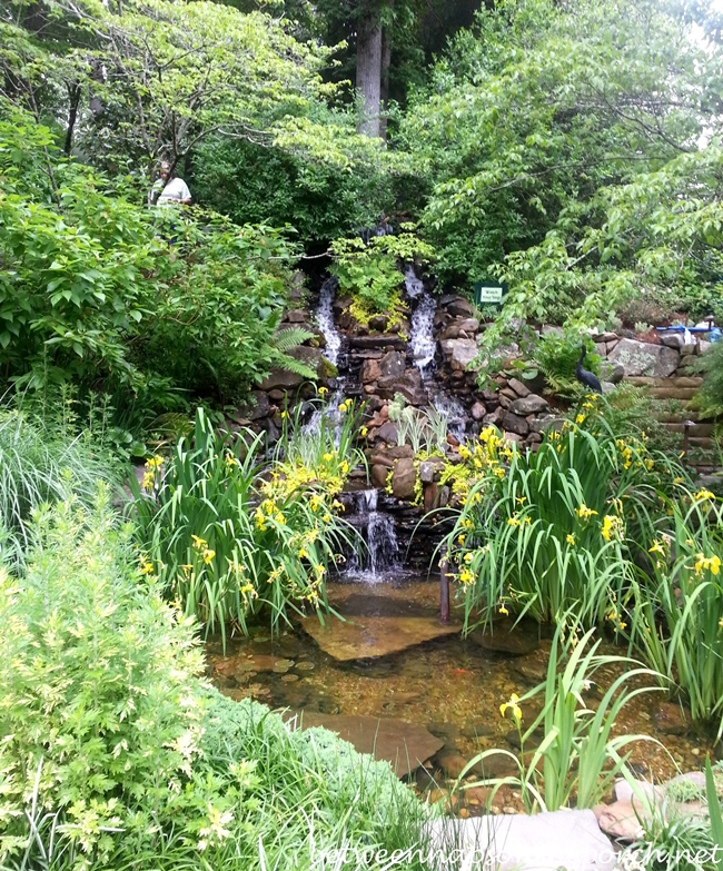 Waterfall and Pond for the Backyard Garden