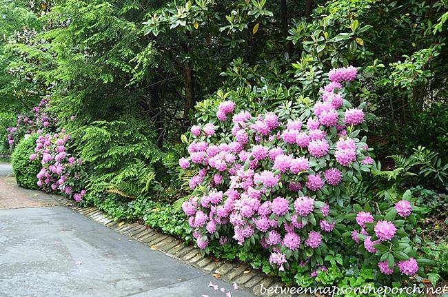 Atlanta Botanical Garden, Gardens for Connoisseurs Tour 02