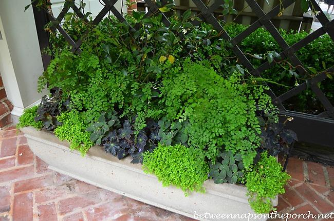 Atlanta Botanical Garden, Gardens for Connoisseurs Tour 03
