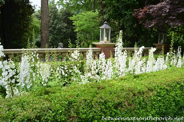 Atlanta Botanical, Gardens for Connoisseurs Garden Tour 16