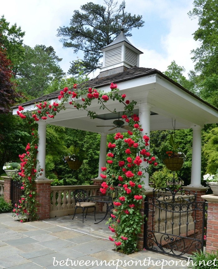 Atlanta Botanical, Gardens for Connoisseurs Garden Tour 19