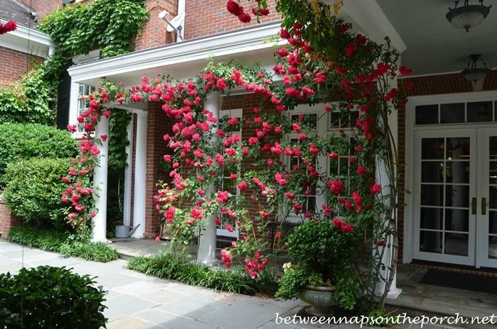 Atlanta Botanical, Gardens for Connoisseurs Garden Tour 20