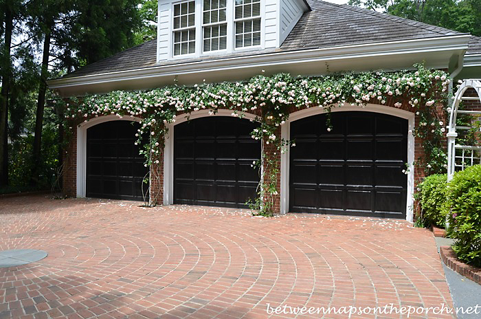 Climbing Roses Over Garage