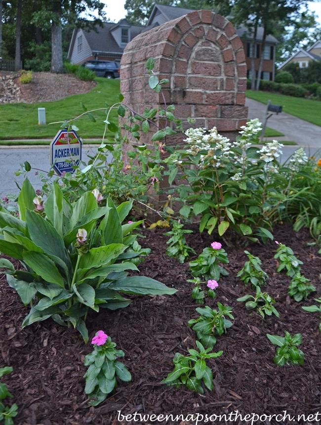 Garden for the Mailbox