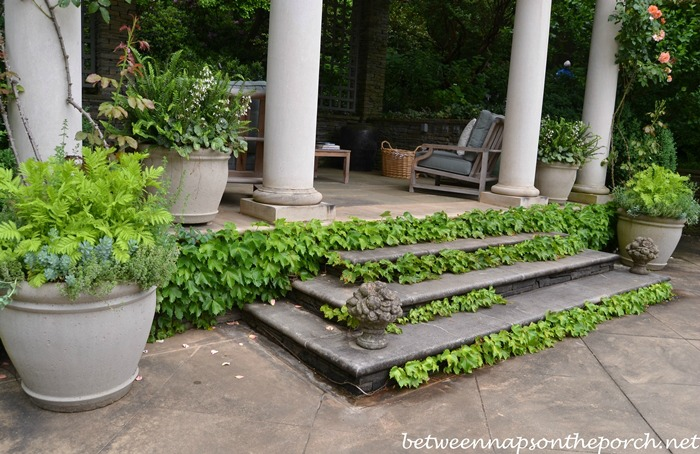 Growing Ivy along Stairs or Steps (1)