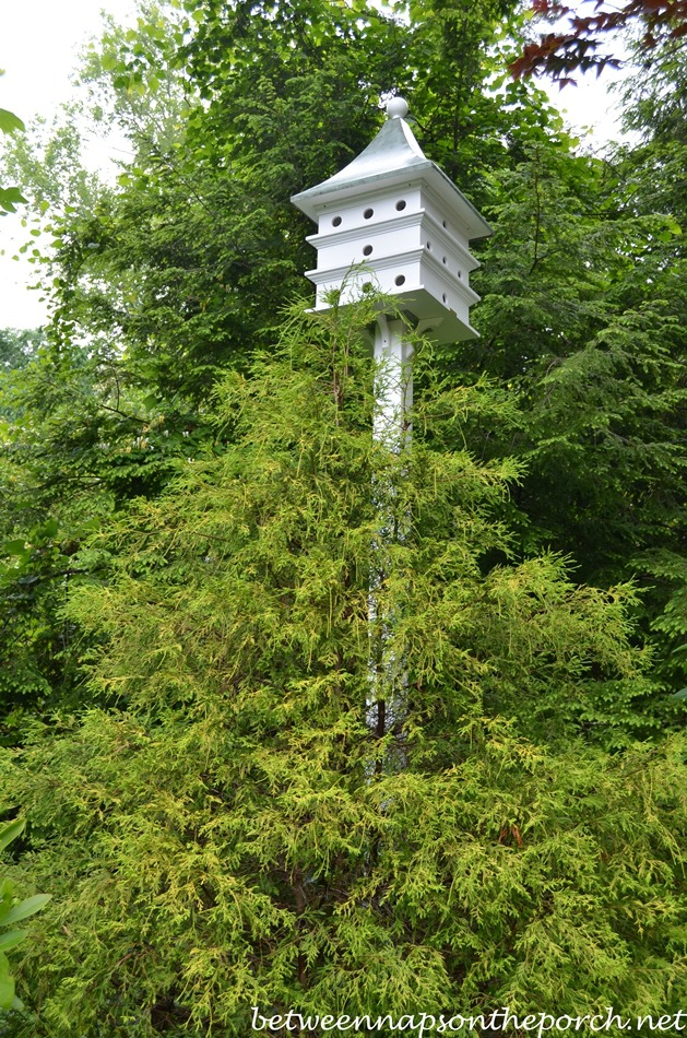 Lazy Hill Purple Martin Bird House