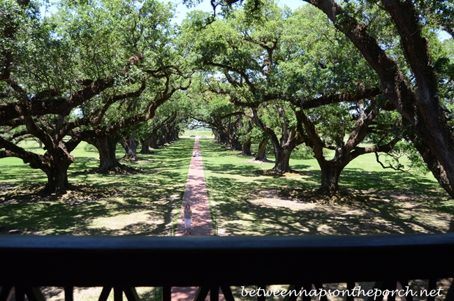 Oak Alley Plantation View From the Balcony_wm