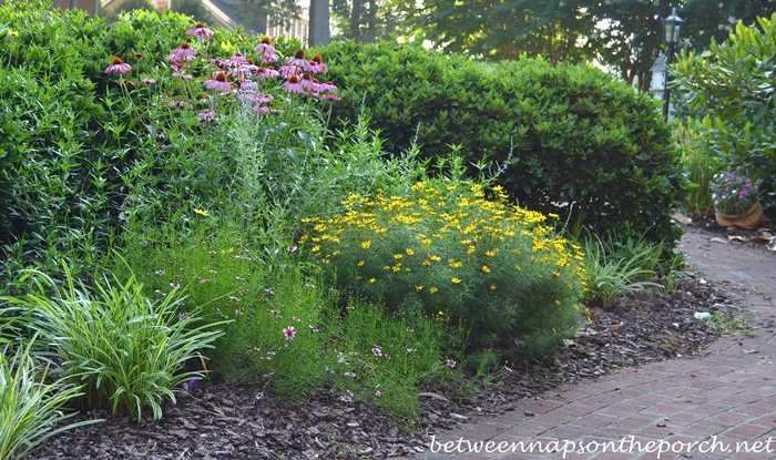 Perennial Garden with Purple Coneflower, Coreopsis Moonbeam and Russian Sage_wm