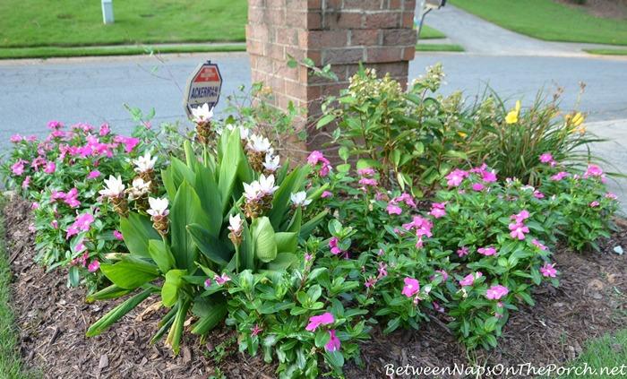 Summer Garden for a Mailbox