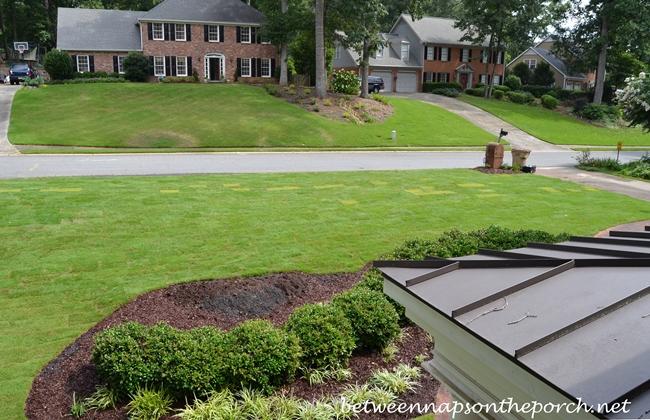 Zeon Sod in Front Yard Landscape