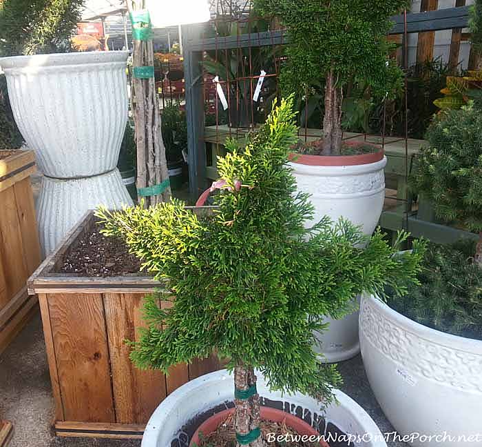 Garden Accent and Topiaries7