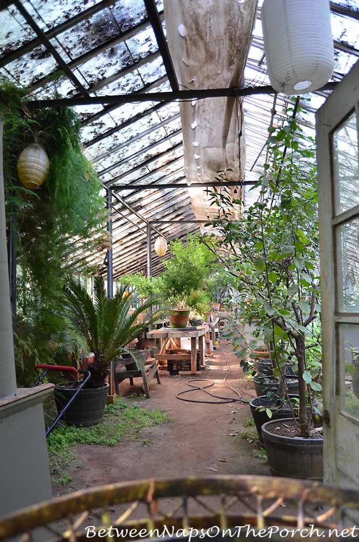 Greenhouse in Ryan Gainey's Garden