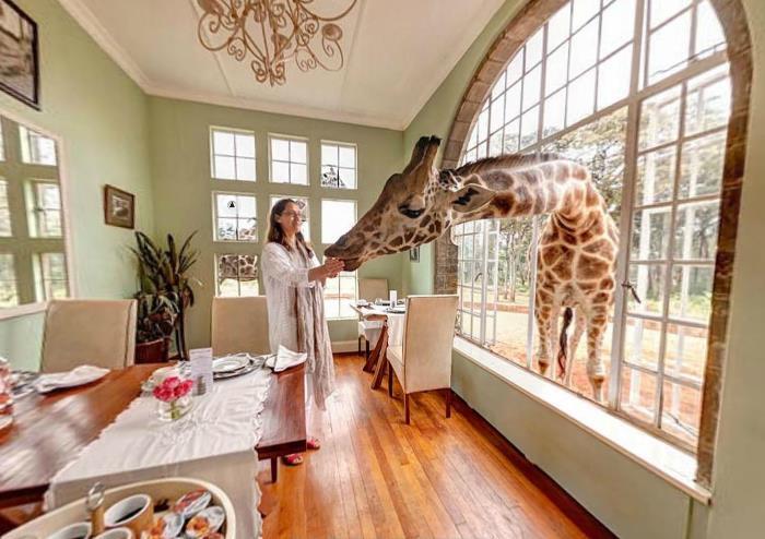 Breakfast Room Giraffe Manor