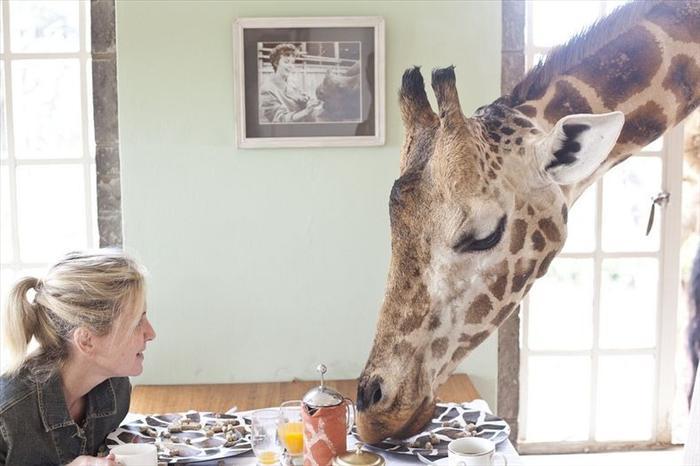 Giraffe Manor Breakfast Room