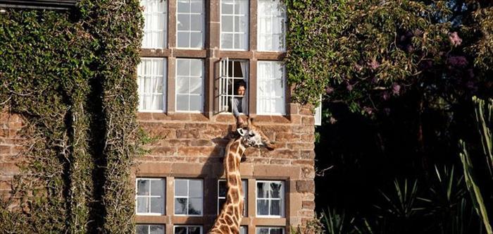 Giraffe Manor Nairobi Vacation