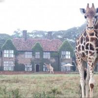 Giraffe Manor, A Unique Travel Adventure