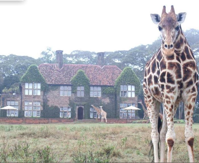 Rooms: A Tour Of Daisy Room At Giraffe Manor & A Visitor To My