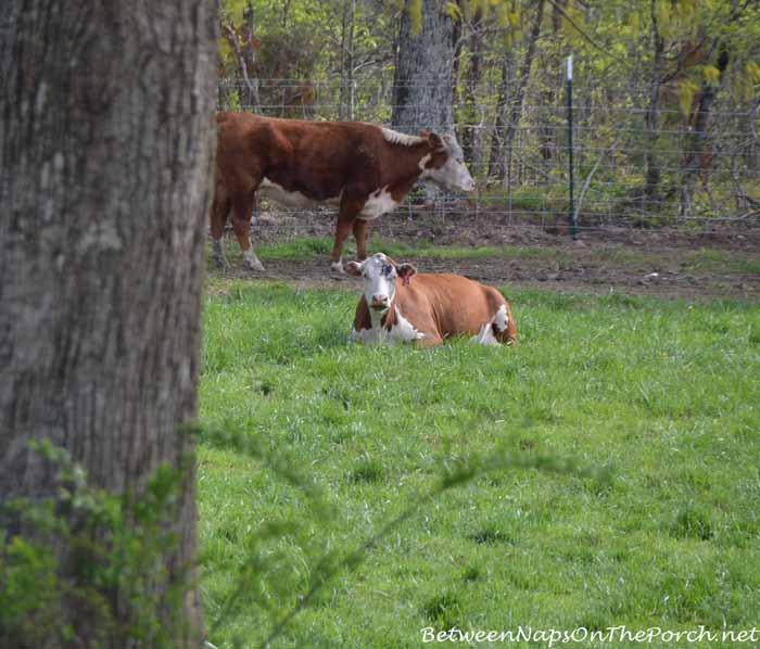 Scenes From The Farm 01_wm