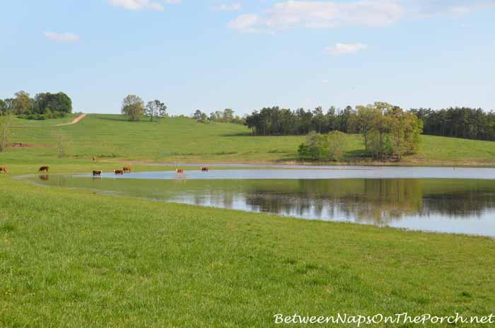 Scenes From The Farm 07_wm
