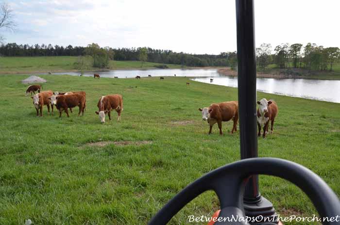 Scenes From The Farm 20_wm