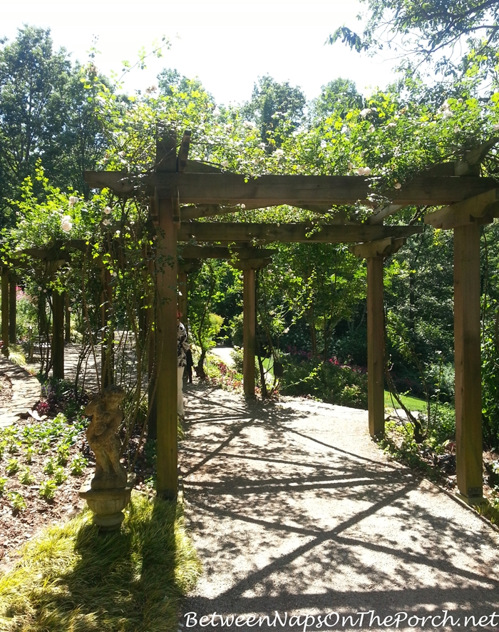 Arbor with New Dawn Roses, Gibbs Gardens