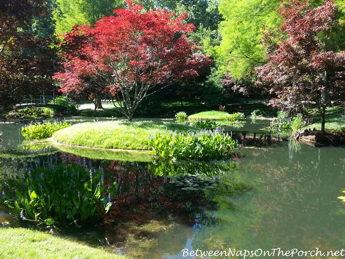 Japanese Maple in Gibbs Gardens, Ballground Georgia 23