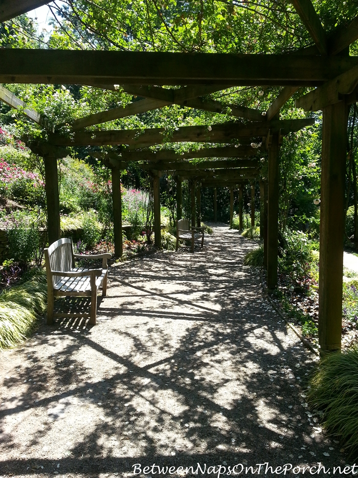 Strolling under the Rose Arbor in Gibbs Gardens