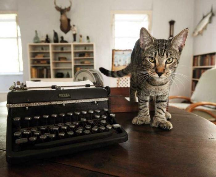 Ernest Hemingway Six-Toed Kitty