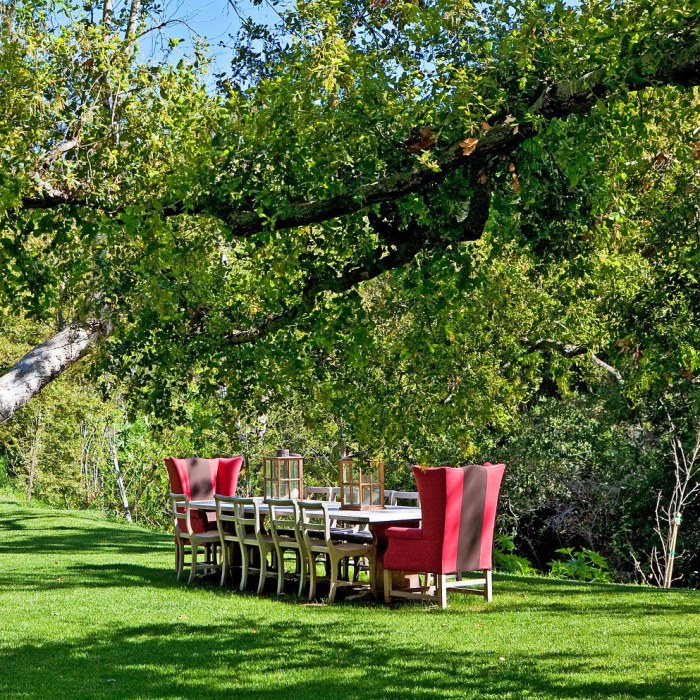 Dining Outdoor Under the Trees and Stars