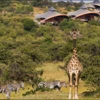 Africa Bound: A Visit To Mahali Mzuri and Giraffe Manor