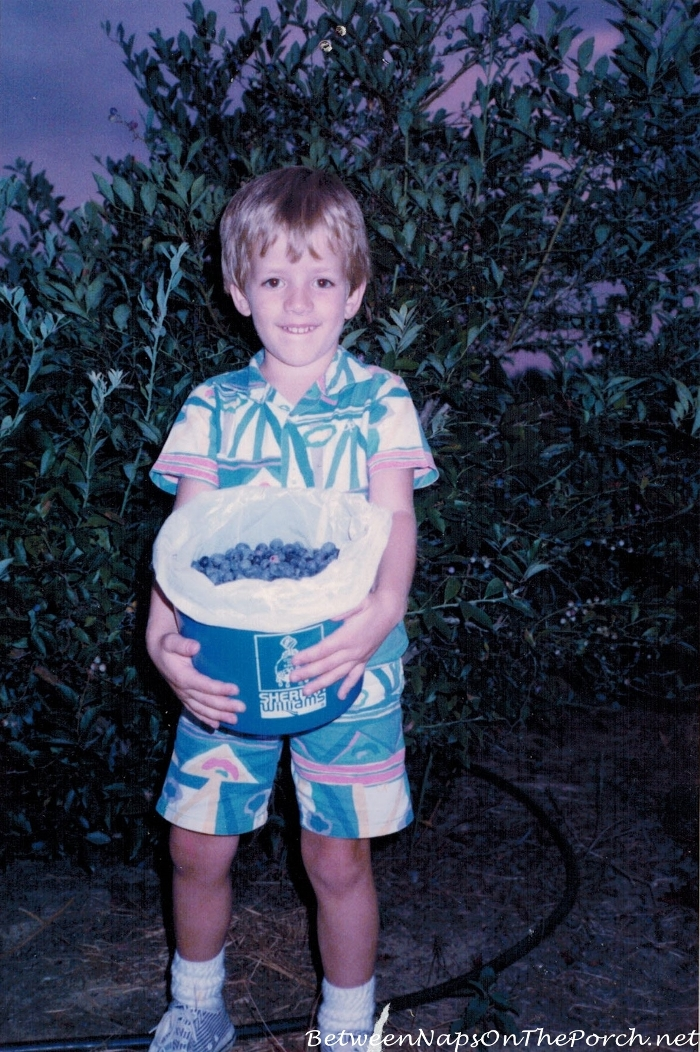 Picking Blueberries, 1987, Berry Patch Farms