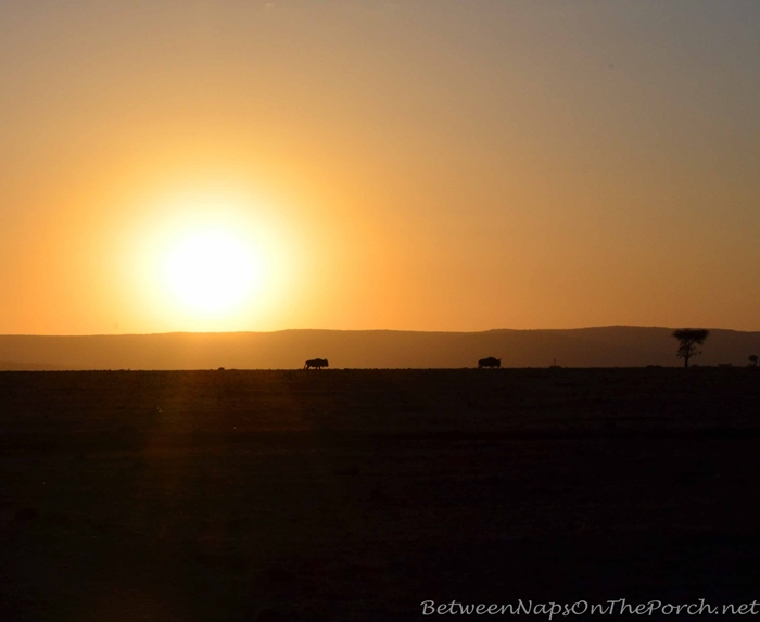 Beautiful Sunset in Kenya, Africa_wm