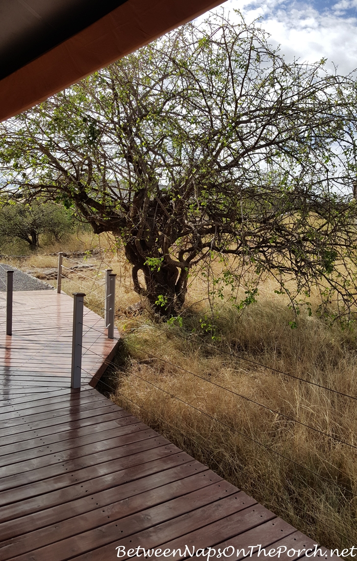 Boardwalk outside Mahali Mzuri