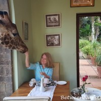 Breakfast with Daisy and Giraffe Kisses
