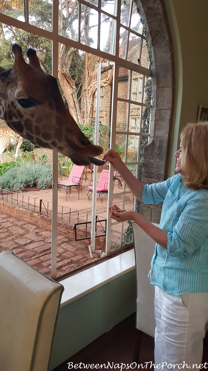 Feeding a Giraffe at Giraffe Manor in Kenya