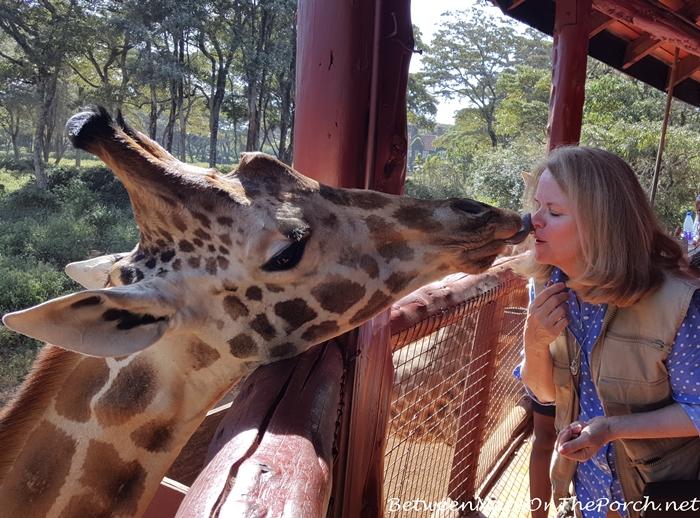 Giraffe Kisses at the Giraffe Center in Nairobi